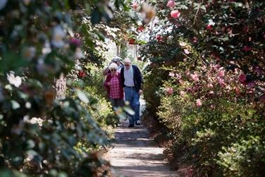 Visiting Massee Lane Gardens