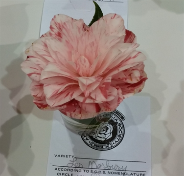 Camellia Varieties Registered in 1991