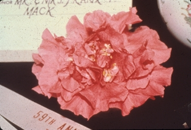 Camellia Varieties Registered in 1985