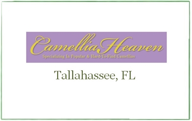 Camellia Heaven