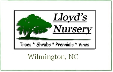 Lloyd's Nursery