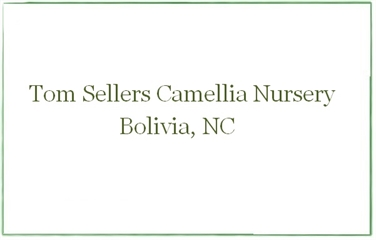 Tom Sellers Rare Camellia Nursery