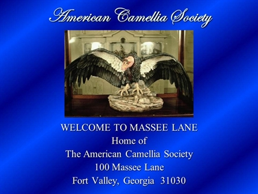 Take a Tour of Massee Lane
