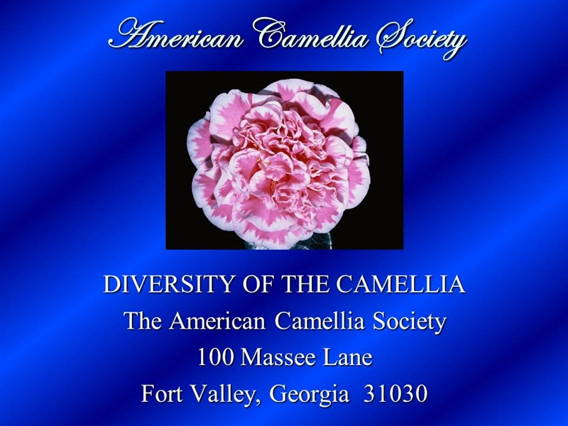 Diversity of the Camellia