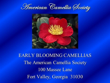Early Blooming Camellias