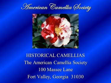 Historical Camellias