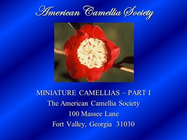 Miniature Camellias