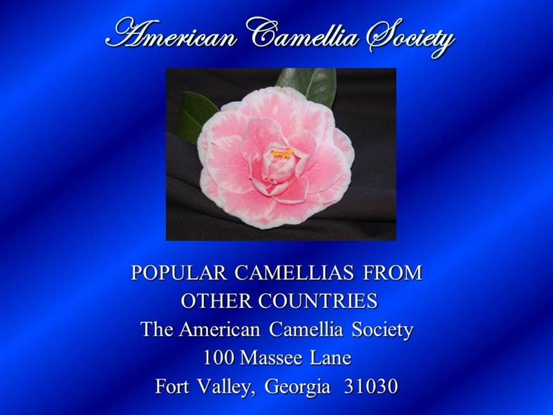 Popular Camellias form Other Countries