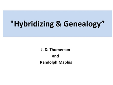 Hybridizing and Genealogy of Camellias