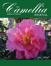 Camellia Journal December 2011 - February 2012