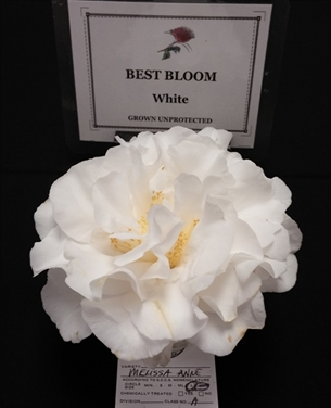 White and Antique Varieties