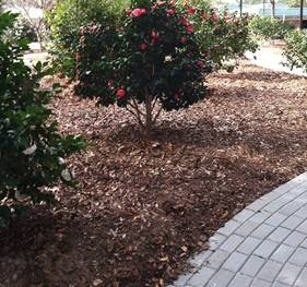 University of West Florida Camellia Garden