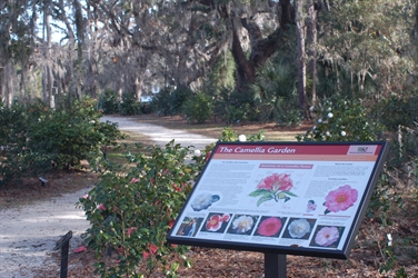 Camellia Garden at the Coastal Discovery Museum