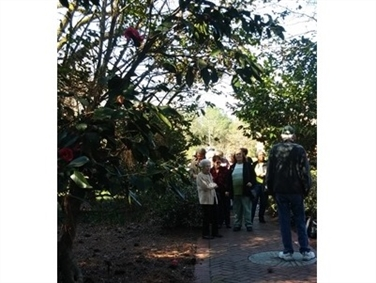 Camellia Season Guided Tours at Massee Lane Gardens