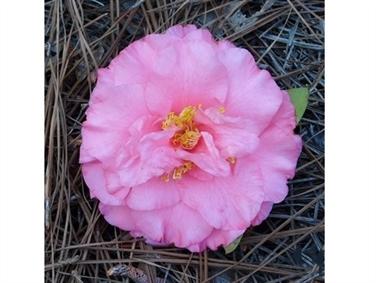Beauty-N-Pink