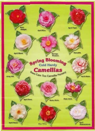 Historical Camellia Documents