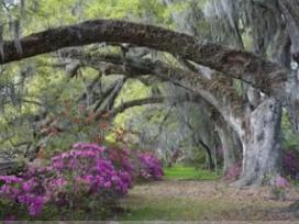 Magnolia Gardens Camellia Introductions