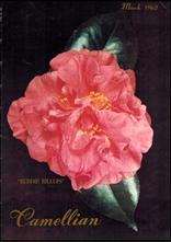 Camellian - Vol. XIII, No. 2 - March 1962