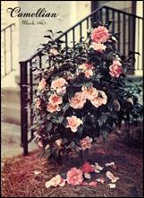 Camellian - Vol. XIV, No, 2 - March 1963