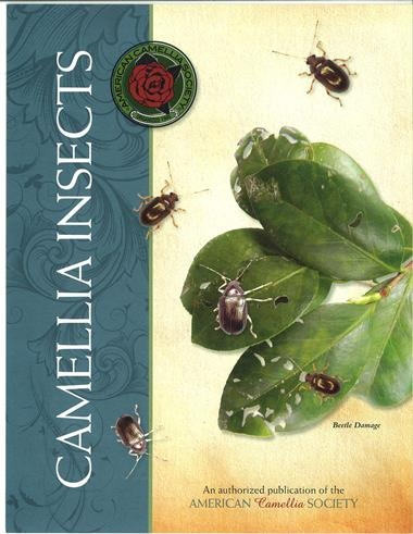 Camellia Insects