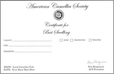 Best Sport Certificate