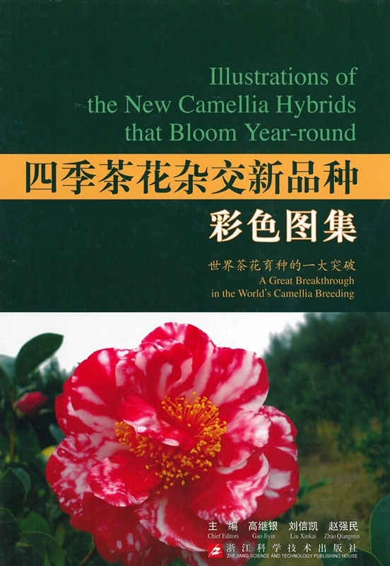 Illustrations of the New Camellia Hybrids That Bloom Year-round