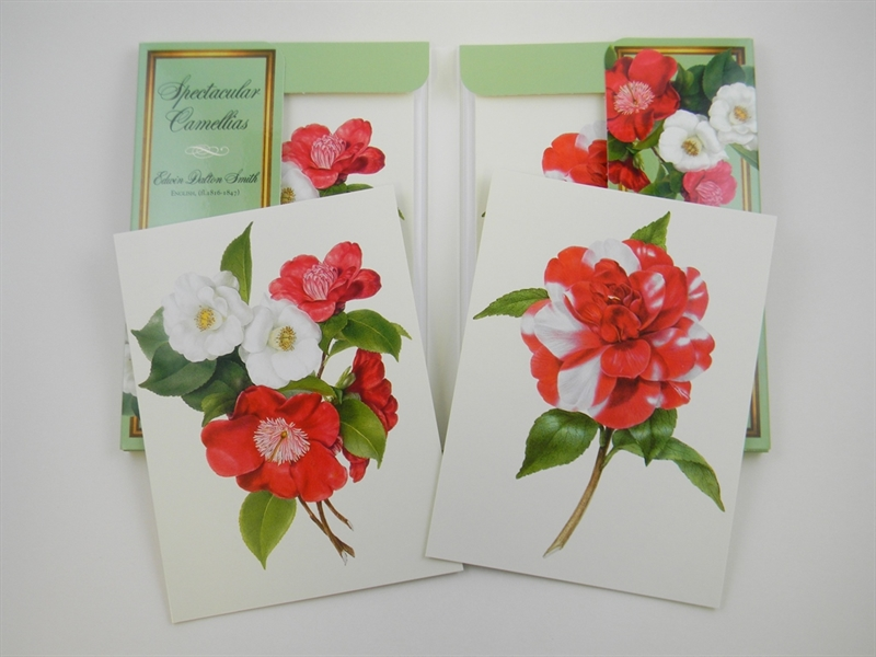 Spectacular Camellias Notecards