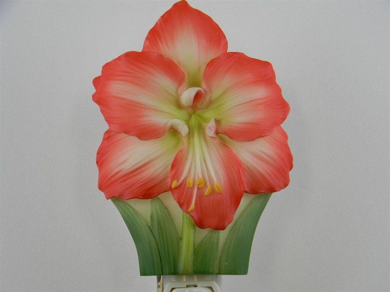 Amaryllis nightlight american camellia society for Amaryllis culture