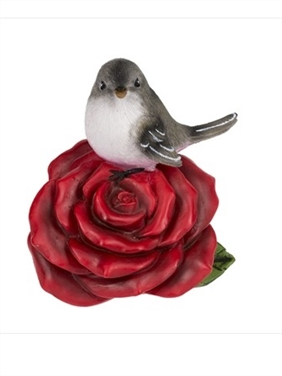 Northern Mockingbird on Rose