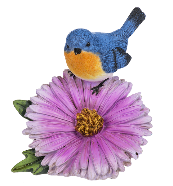 Eastern Bluebird on Aster
