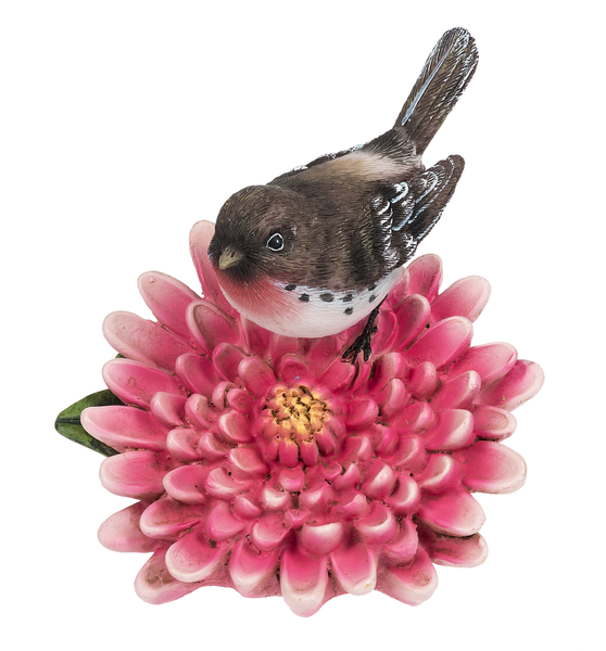 House Finch on Chrysanthemum