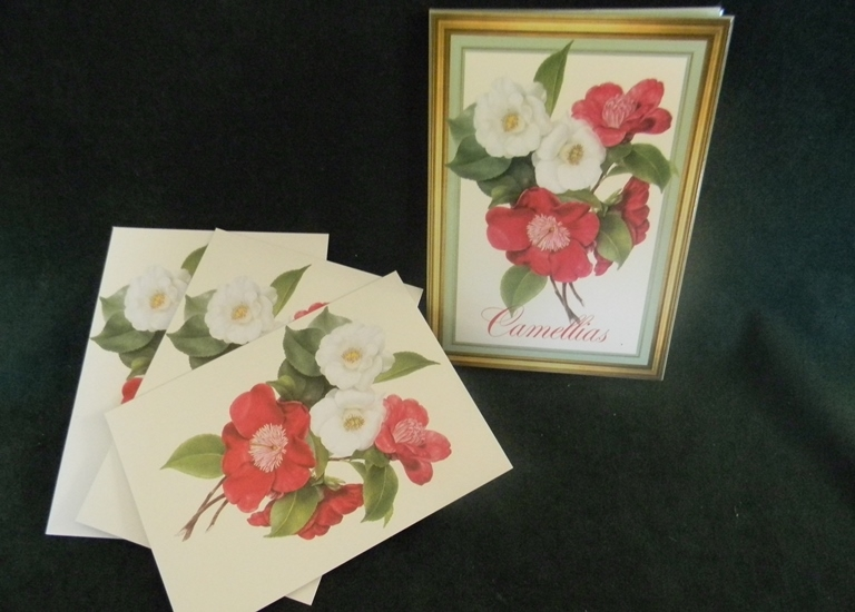 Julia Bell Camellia Note Cards